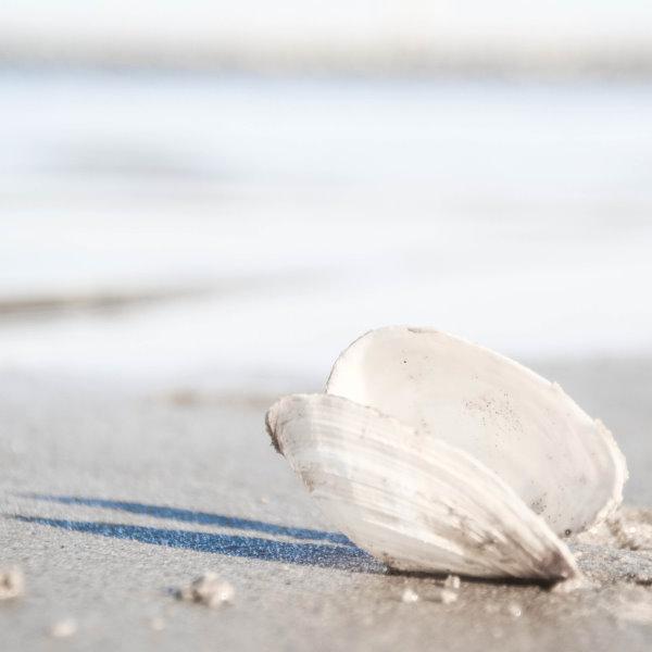 Muschel am Strand - Prokrastionation am Montag