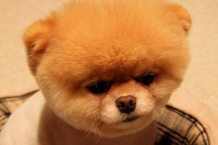 Boo Dog Toy Ebay