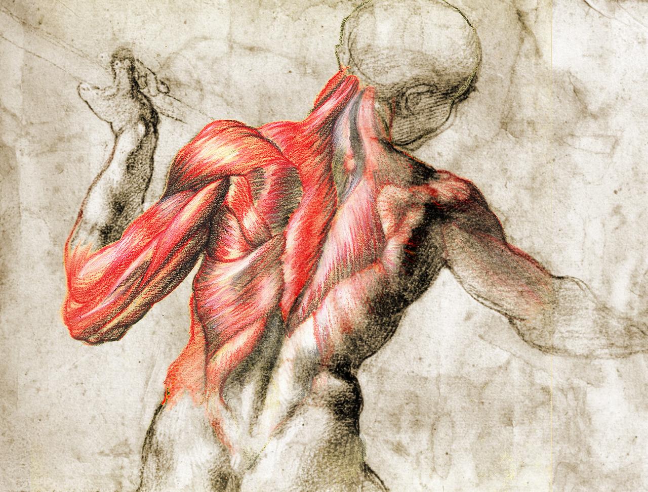Lujoso Estudio De La Anatomía Para Artistas Colección - Anatomía de ...