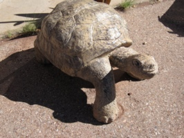 <center>The Way of The Tortoise</center>