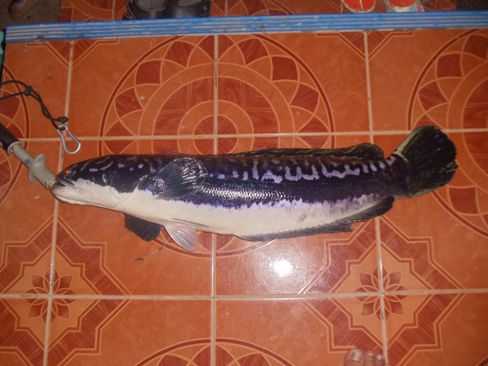 fishing: Chado fishing