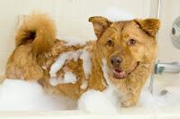 Smelly dog, ugly dog, bath a dog, bath with dog