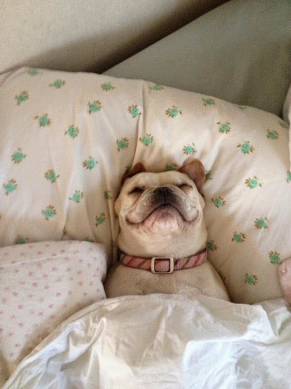 Cute dogs - part 20 (50 pics), funny dog pictures, dog photos