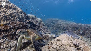 Google Street View recording the Nature Beauty of Underwater