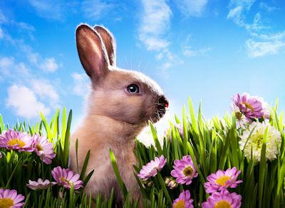Lindo conejo jugando en los prados floridos - Pascua y Eastern