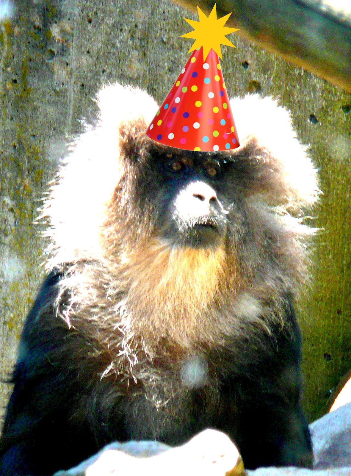 I Am NOT An Anteater Happy Birthday Jesus