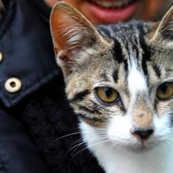 Kedi bırakmak nasıl bir duygudur?