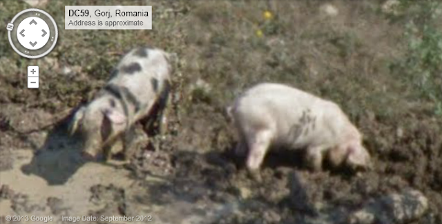 Dirty Pigs Google Streetview