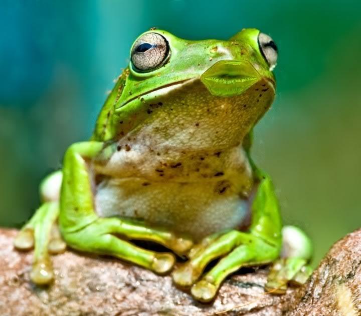 Fotos chistosas de rana