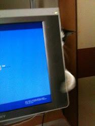 Adivinha quem tá atrás do monitor???