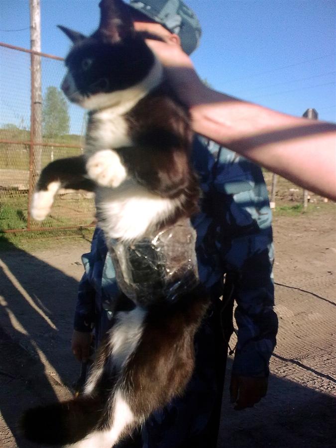 SEORANG wardar memegang seekor kucing yang digunakan untuk menyeludup beberapa buah telefon bimbit dan alat pengecas ke dalam sebuah penjara dekat bandar Syktyvkar pada Jumaat lalu.