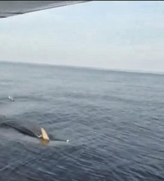 Shark attacks plane - photo#1