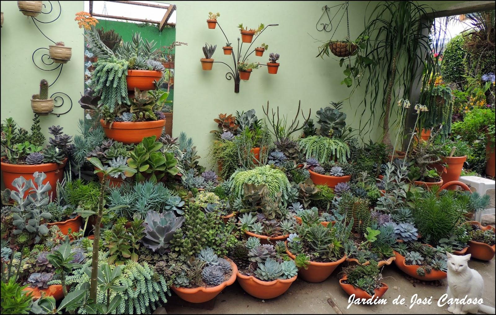 plantas de jardim que gostam de umidade:Jardim de Josi Cardoso: Cuidados com as Suculentas.