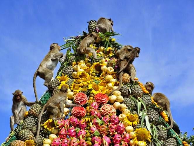 lễ hội buffet cho khỉ - những lễ hội ở Thái Lan