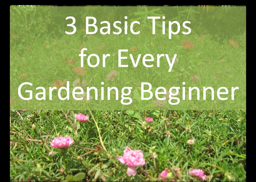 Gardening Beginner Tips