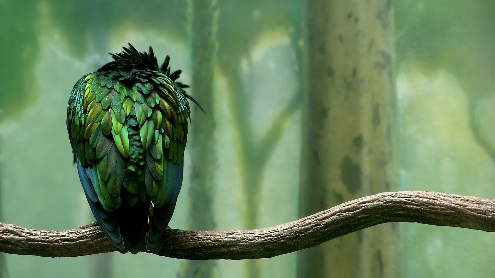 http://3.bp.blogspot.com/-909SejifXpU/UN_4v_UL0DI/AAAAAAAAKsI/unh7Lnn9pPY/s1600/green_colored_bird-HD.jpg