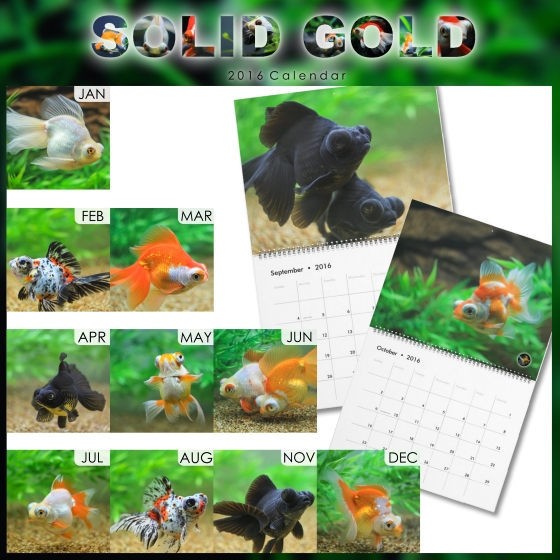Solid Gold Calendar