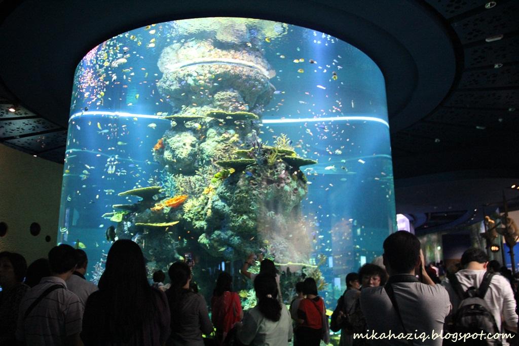 mikahaziq sea aquarium sentosa
