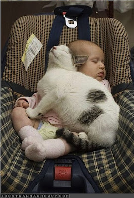 funny pictures of a baby sleeping with a cat
