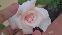 El más pequeño de los rosales