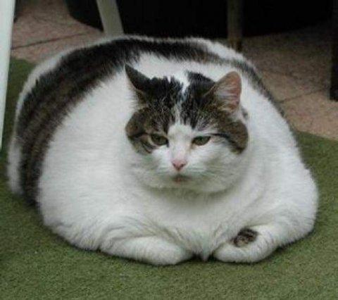 iNi bLog iLi aiSyah: Kucing 6 ibu jari? kucing besar??