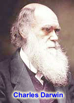 What topics should I include in my debate essay on Darwinian evolution?