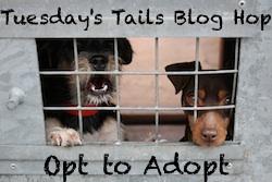 http://dogsnpawz.com/tuesdays-tails-sweet-zulu-needs-a-home/#.Vl3Ej__H_IU