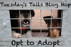 http://dogsnpawz.com/tuesdays-tails-beautiful-lab-needs-forever-home/#.VpUPqv_H_IU