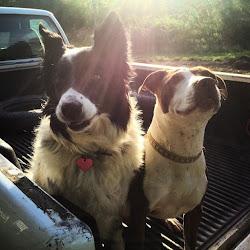 Sun Dog Farm
