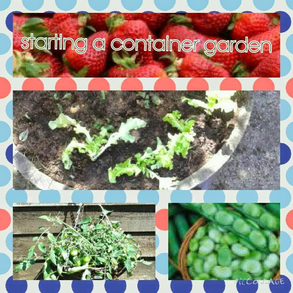 starting  container garden