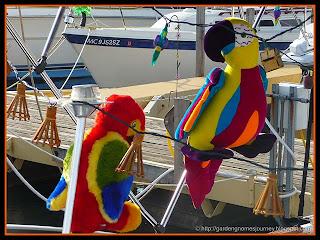 hubby's parrots
