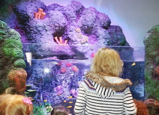 SEaLife Manchester foyer fish tank