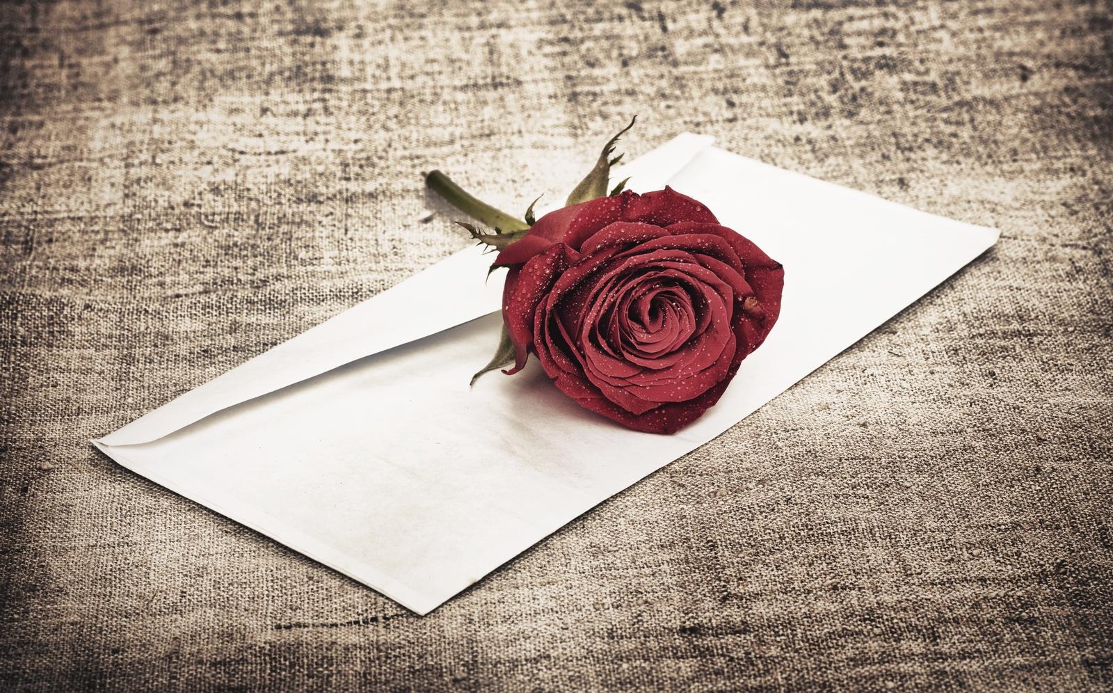 Красные розы сток-фотографии, графику и векторные иллюстраци.