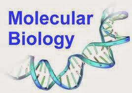 Biologi Molekuler Adalah