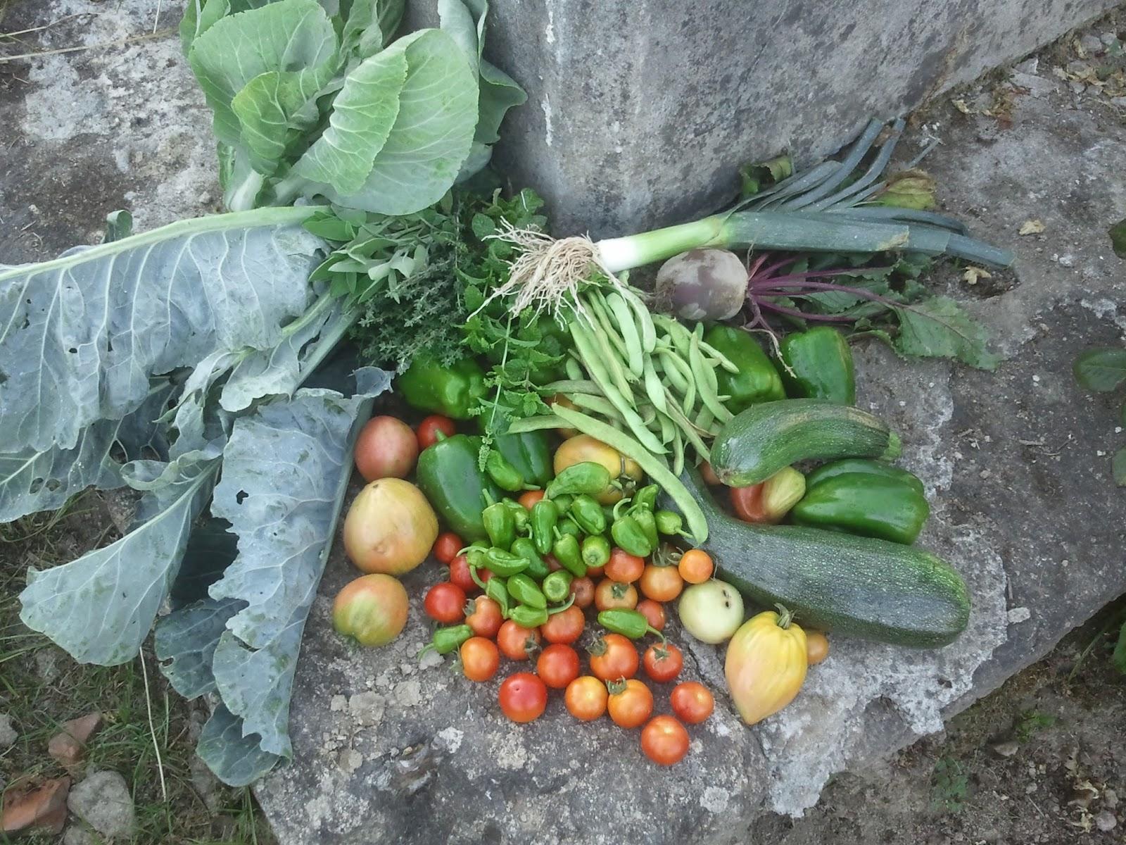 agosto colheita