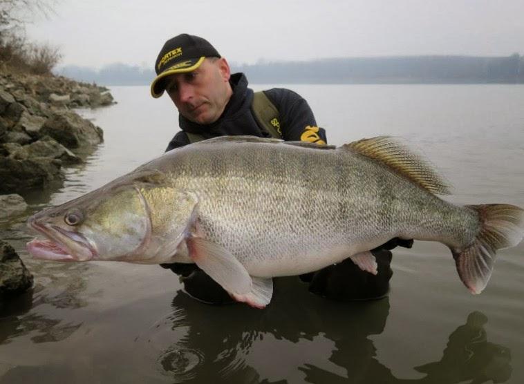 Mondo pesca news dicembre 2013 for Grosso pesce di lago