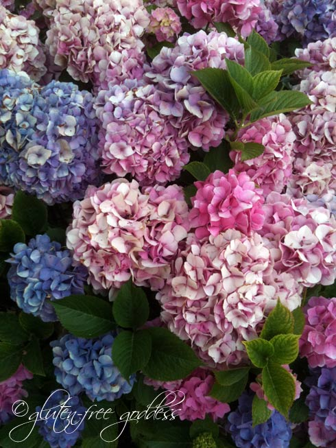 Victorian hydrangea in lovely vintage hues