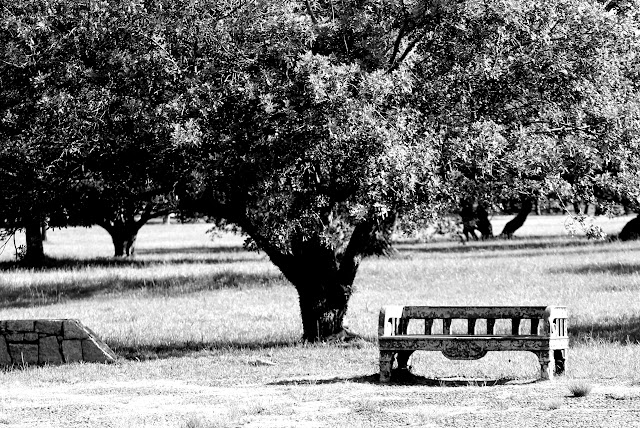 park - seat with tree in the background