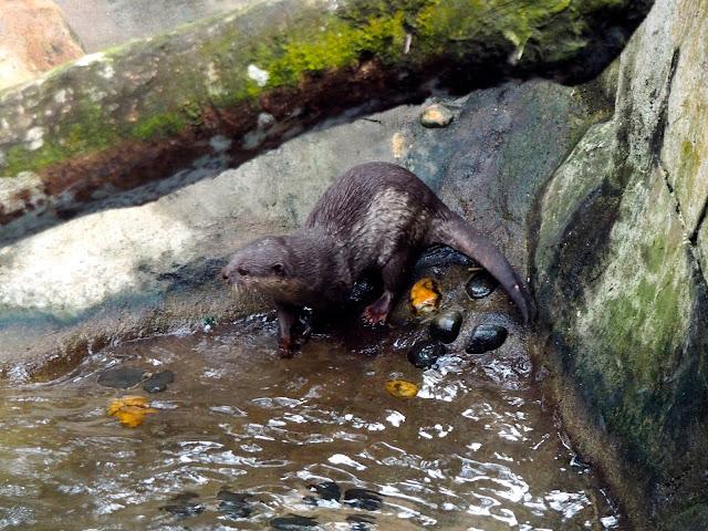 Otter in Ocean Park, Hong Kong