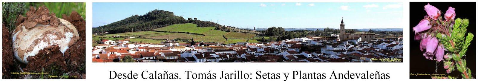 Desde Calañas: Setas y Plantas Andevaleñas. Tomás Jarillo