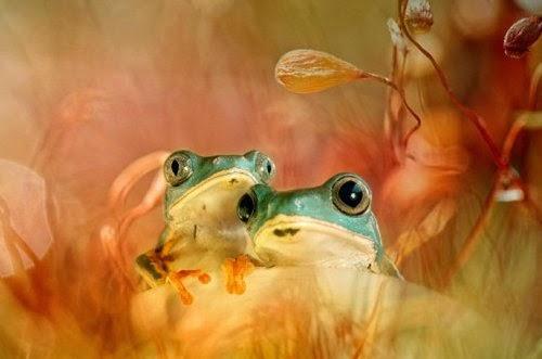 05-Wil-Mijer-Frog-Macro-Photography-www-designstack-co