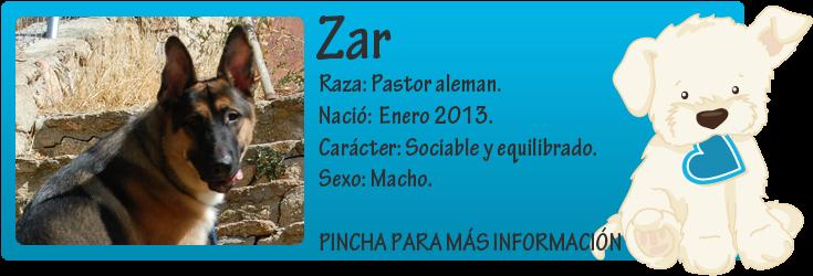 http://mirada-animal-toledo.blogspot.com.es/2013/09/zar-encerrado.html