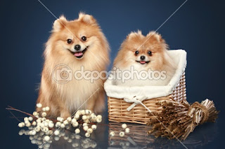 Funny Puppies and Dogs