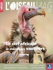 Le ciel africain se vide de ses vautours