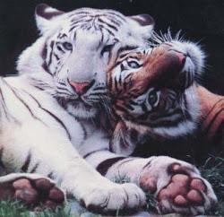 Mijn lievelingsdieren!