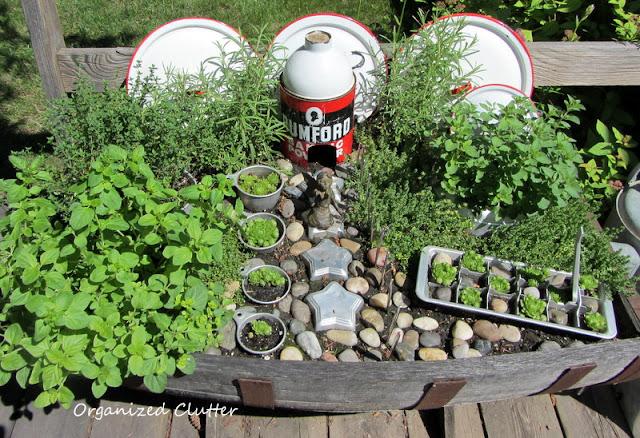 Kitchen Fairy Garden