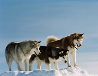 Eight Below (Max, center), by Walt Disney Studios