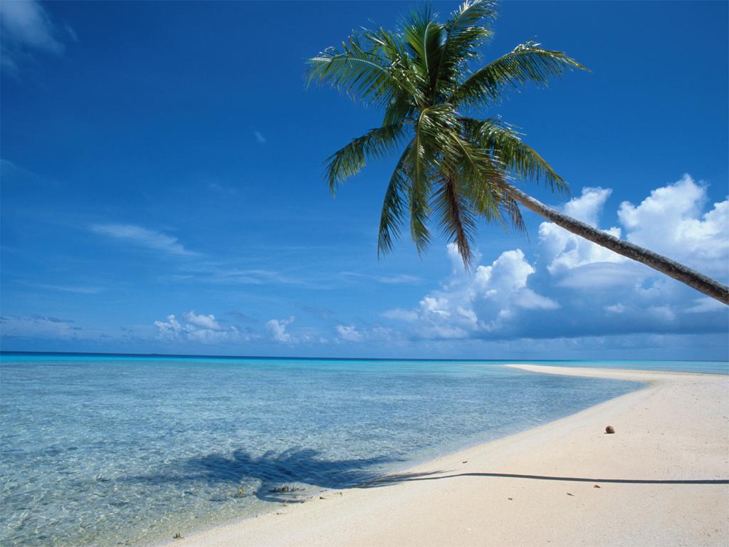 http://3.bp.blogspot.com/-93o023a6Lcw/TVf1iPTND8I/AAAAAAAAAG8/4frSbvne5x8/s1600/Beach_Palm_Tree_White_Sand_Cape_Wallpaper_1o13y.jpg