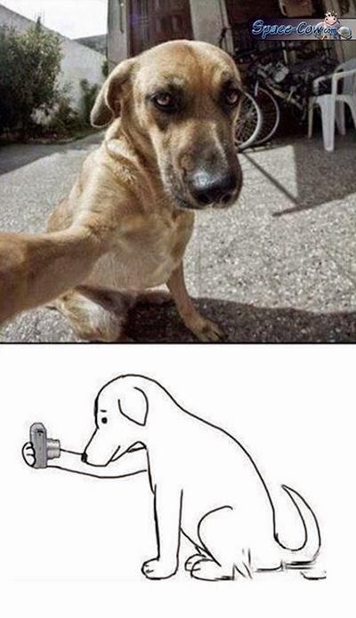 funny dog selfie comics