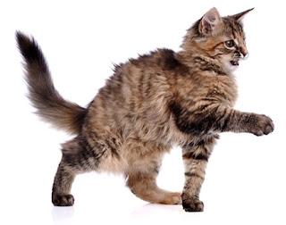 Viêm phổi trên mèo. Ảnh minh họa.